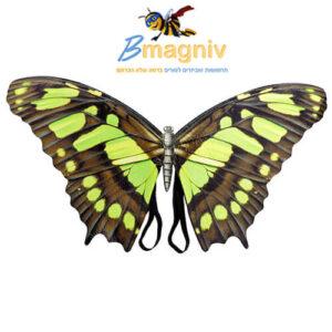 כנפיים פרפר יער מפוארות פיות חום ירוק : עשויות מחומר איכותי וקל PVC